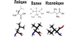 Зачем нужны аминокислоты BCAA?